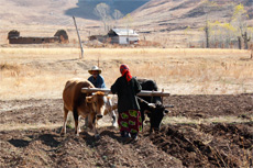 Food Security in Central Asia
